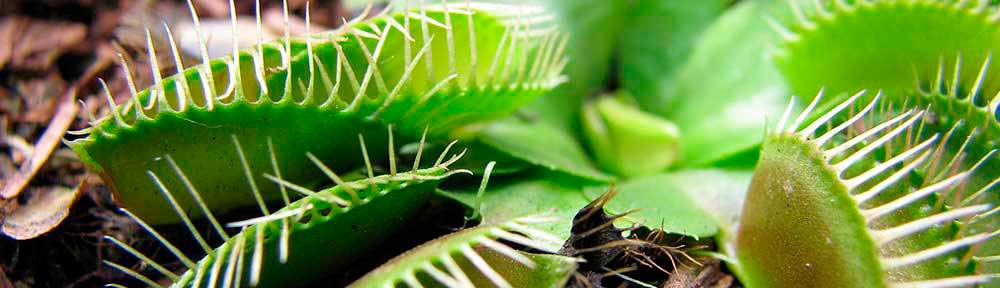 carnivoras -Descubre el mundo de las plantas carnívoras