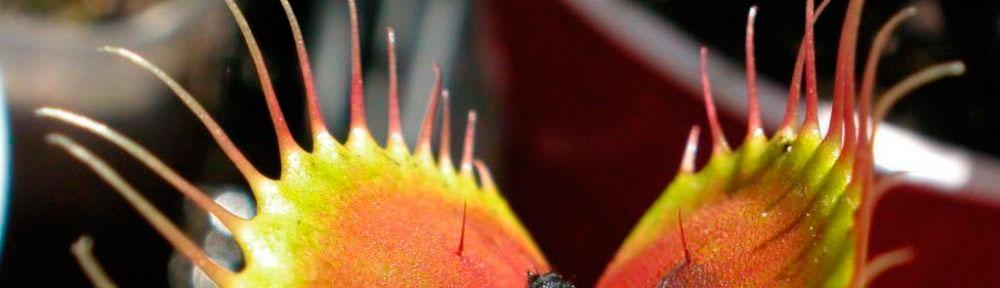 Clasificación Plantas carnivoras