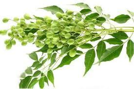 árbol de neem o nim
