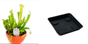 como regar las plantas